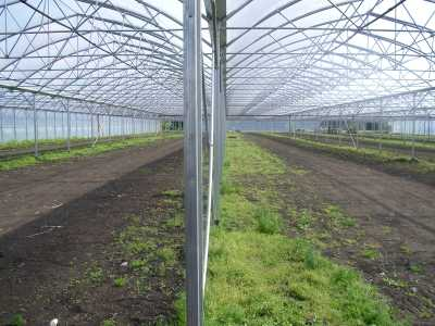 Zemní vrut pro skleník